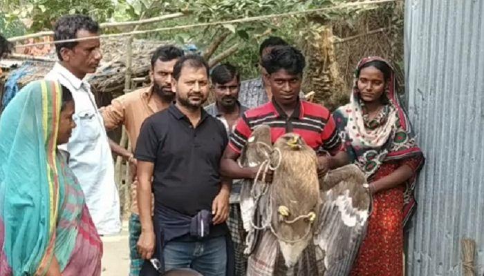 নাটোরে বিরল প্রজাতির নেপালি ঈগল উদ্ধার