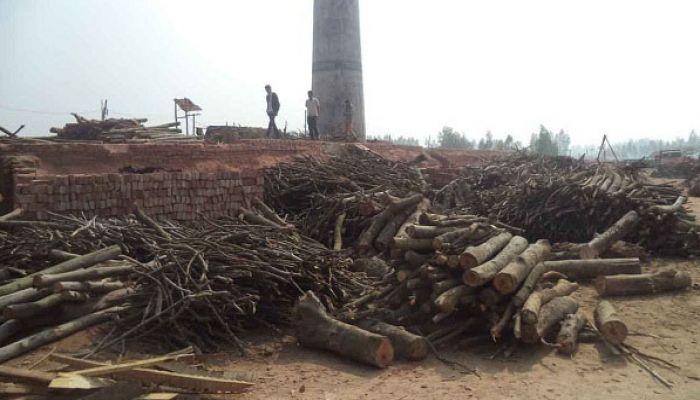 পীরগঞ্জে ইটভাটায় অবাধে পুড়ছে কাঠ