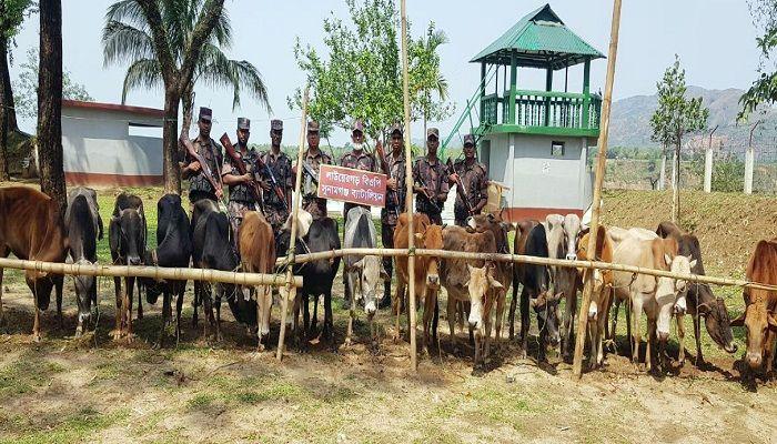 সুনামগঞ্জ সীমান্তে ১০ লাখ টাকার ভারতীয় গরুর চালান আটক