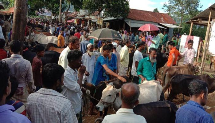 তাহিরপুরে চোরাই গরু বিক্রির জন্য অবৈধ হাট