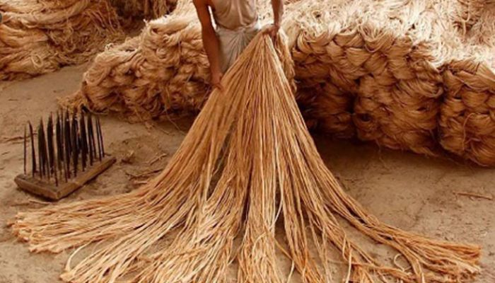 রাজশাহীতে সোনালি আঁশে কৃষকের সুদিন ফিরেছে