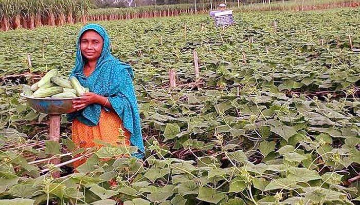 বকশীগঞ্জে সবজি চাষে হালিমা বেগমের বিপ্লব