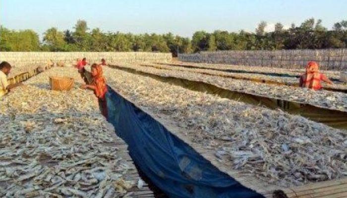 অপার সম্ভাবনার শুঁটকি খাত, চাই শুধু সরকারের নজর
